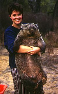 Dr. Taylor and wombat